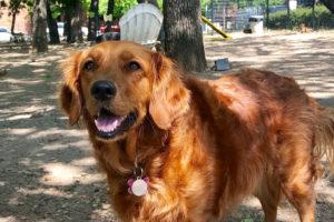 Arkansas Adventures: Bradi's Pet-Friendly Favorites