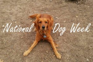 5 Fun Ideas to Celebrate National Dog Week